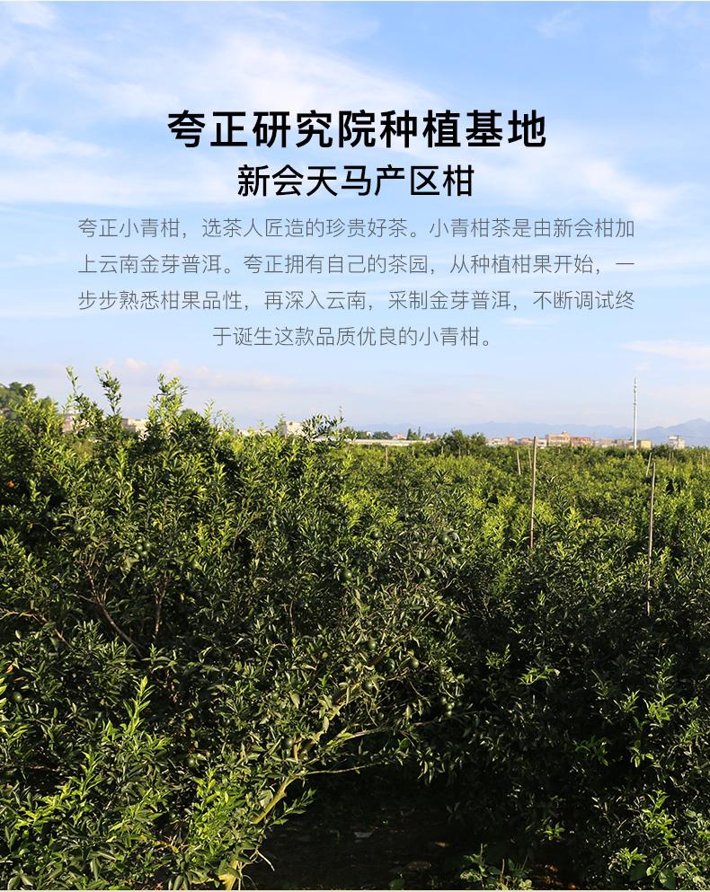 小青柑(普金豆)_02.jpg